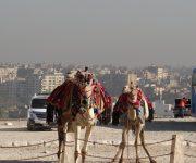 Sobre el camello n° 18